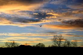 the joy of flight